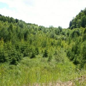 KWB Sieniawa ekologia